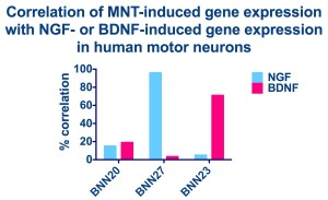 In human embryonic stem cell-derived motor neurons BNN27 produced gene expression changes that nearly perfectly mimicked NGF. In the same cells, BNN23 highly mimicked BDNF.